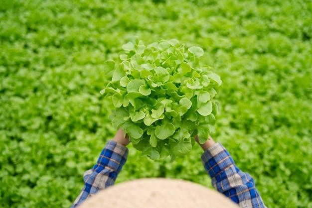 Шляпа азиатской девушки фермера нося работая в зеленом доме гидропоники держа салат зеленых дубов vegetable для того чтобы проверить качество.
