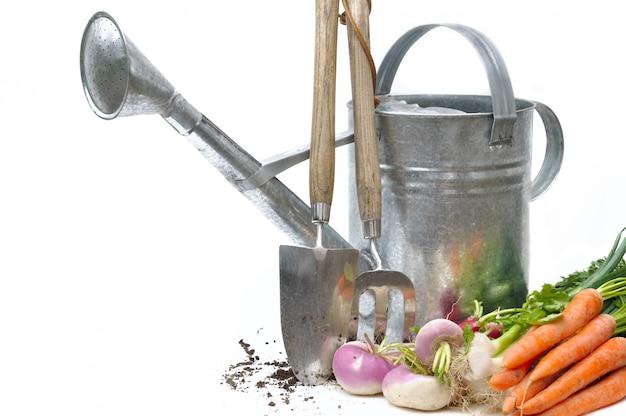 Овощи из сада с инструментами