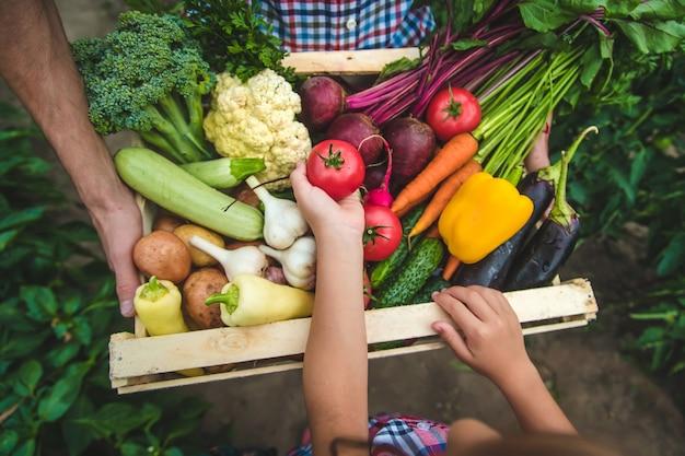 Овощи в руках ребенка и отца фермера в саду. выборочный фокус. природа.