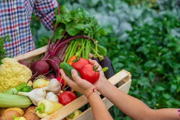 庭の農夫の子供と父の手にある野菜。セレクティブフォーカス。