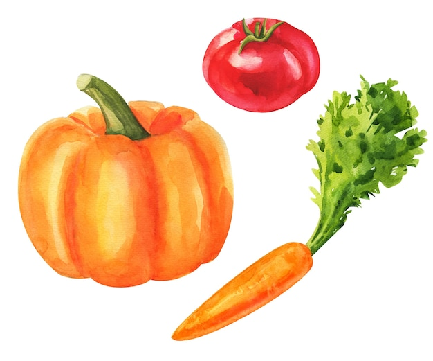 Овощи. акварель овощной набор. свежие вегетарианские блюда иллюстрации.