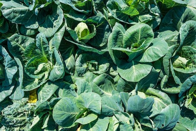 야채 무료 사진