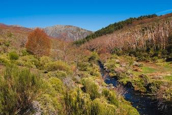 Vegetation in mountain einvironment