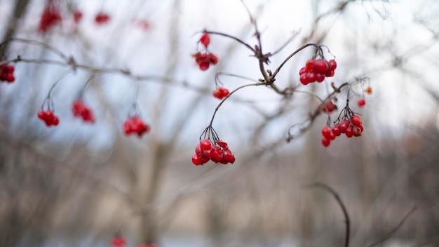 Растительность естественных растений в парке
