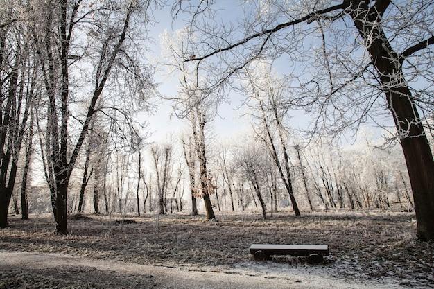 공원의 식물 자연 식물
