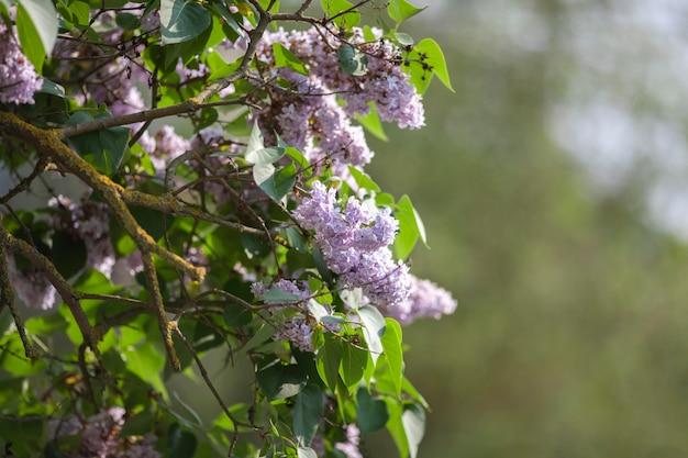 公園内の植生自然植物