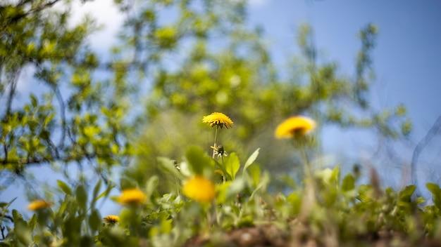 Vegetation natural plants in the park