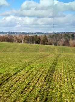 冬後の冬コムギの植生は、更新、黄変、肥料の不足が必要です