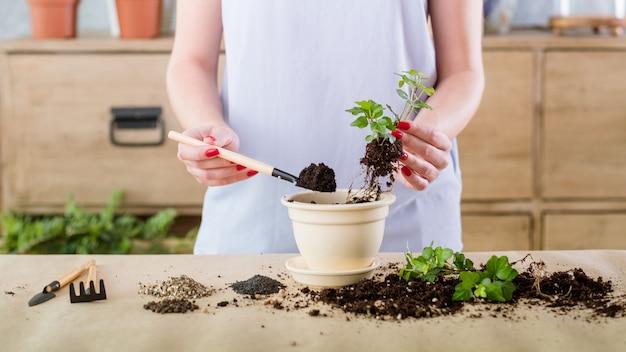 Вегетативное размножение растений. концепция охраны природы. женщина занимается размножением, производя новое растение.