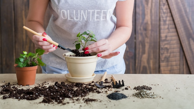 Вегетативное размножение растений. подумайте о зеленой концепции. волонтер занимается выращиванием новых растений.