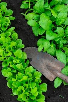 Вегетебль сад и лопата. вид сверху.