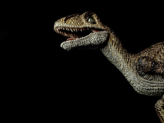 Velociraptor dinosaur on black