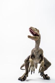 恐竜、白い背景の上のvelociraptor