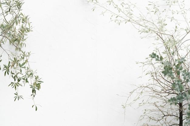 베란다 식물과 흰 벽, 텍스트 또는 그래픽을위한 공간