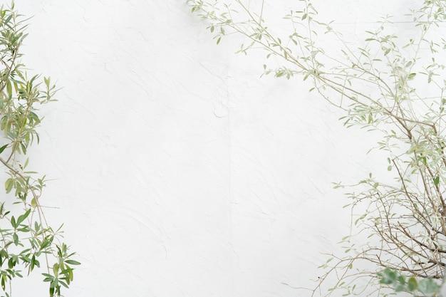 ベランダの植物と白い壁、テキストやグラフィックのためのスペース