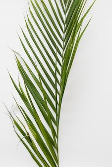 Verdant fresh plant branch