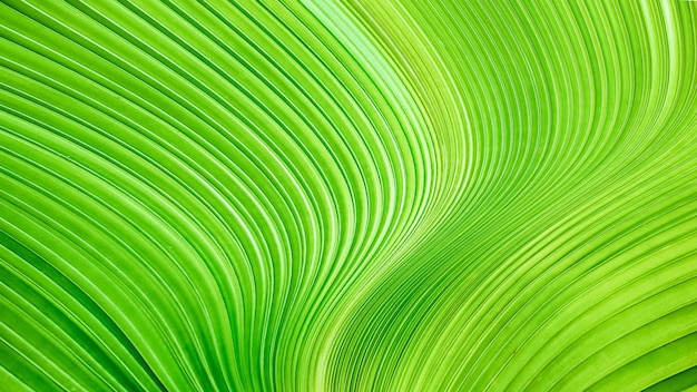Verdant green leaf, smooth and twist lines background. abstract luxury texture.