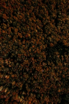 Vertical aerial shot of a forest of trees in fall colors