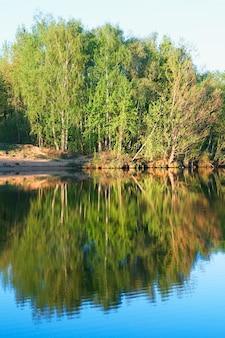 Вертикально выровненные деревья на фоне отражений реки