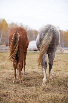 牧草地で休んで時間を過ごしている栗と灰色の馬の垂直背面図ショット