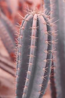 Вертикальный фон с изображением кактуса carnegiea gigantea