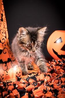 Вертикальная открытка с маленьким милым котом на хэллоуин и домашними животными