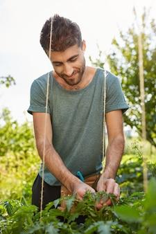 Vertical close up outdoors portrait of cheerful good-looking caucasian male gardener working in garden, tying up vegetables, watching over plants.