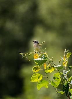 Vertical closeup of a beautiful little bird on a tree branch under the sunlight