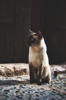 Colpo verticale del fuoco del primo piano di un adorabile gatto siamese