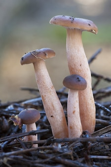 Vertical closeup of magic mushrooms on the ground covered in tree branches under the sunlight