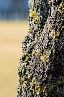 ぼやけた背景で日光の下で苔で覆われた木の樹皮の垂直クローズアップ