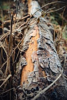 日光の下で枝に囲まれた木の幹の垂直のクローズアップ