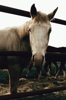 昼間の日光の下でフィールドのフェンスの後ろに白い牝馬の垂直クローズアップ