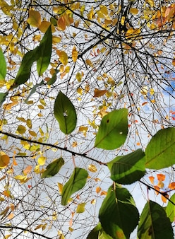 ポーランドの秋の間に曇り空の下で木の枝にカラフルな葉の垂直のクローズアップ