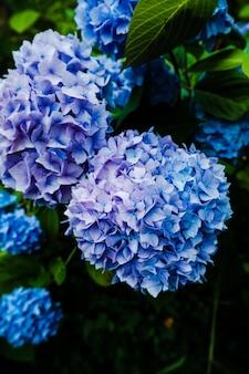 露とオルテンシアの花の垂直クローズアップ