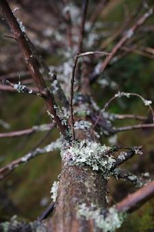 裸木の幹を覆う苔の垂直のクローズアップ