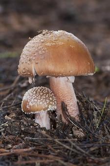 숲의 나뭇잎과 나뭇가지로 덮인 땅에 있는 야생 버섯의 수직 근접 촬영