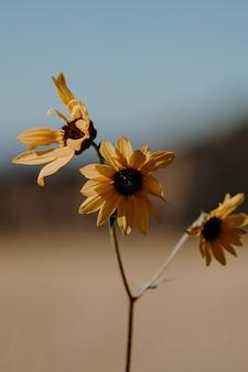 Colpo verticale del primo piano di un bel ramo con tre fiori gialli