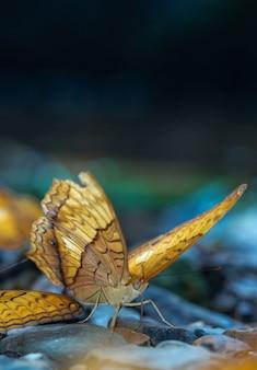 Colpo verticale del primo piano di una bellissima farfalla in natura