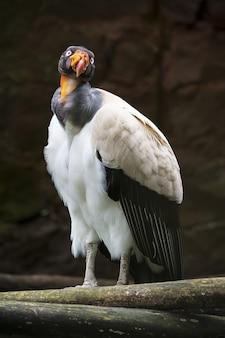 Colpo verticale del primo piano di un bellissimo uccello condor appollaiato su un ramo