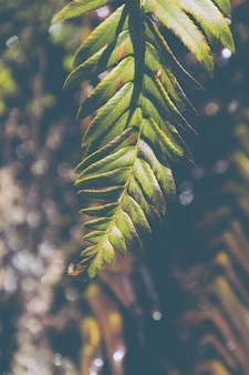 Colpo verticale del primo piano di bello ramo frondoso di un albero