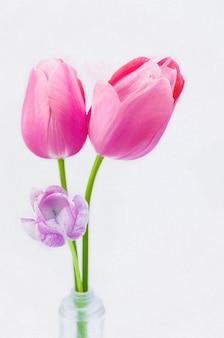 Colpo verticale del primo piano di bei tulipani rosa su fondo bianco