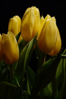 Vertical closeup shot of a bouquet of beautiful yellow tulips with a dark background