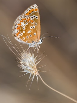 Vertical closeup shot of a butterfly in their natural environment.