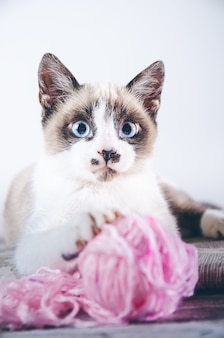Vertical closeup shot of a cute brown and white blue-eyed cat playing with a ball of wool