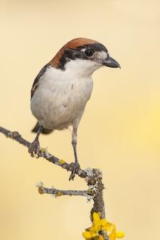 Colpo verticale del primo piano di un uccello esotico che si siede sul piccolo ramo di un albero