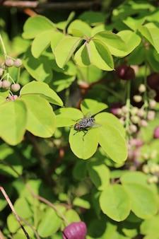 Colpo verticale del primo piano di una mosca sulle foglie verdi
