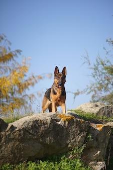 Colpo verticale del primo piano di un cane pastore tedesco in piedi su una pietra in una giornata di sole