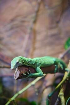 Vertical closeup shot of a green lizard on a tree branch
