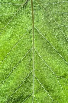 Colpo verticale del primo piano di una foglia modellata verde
